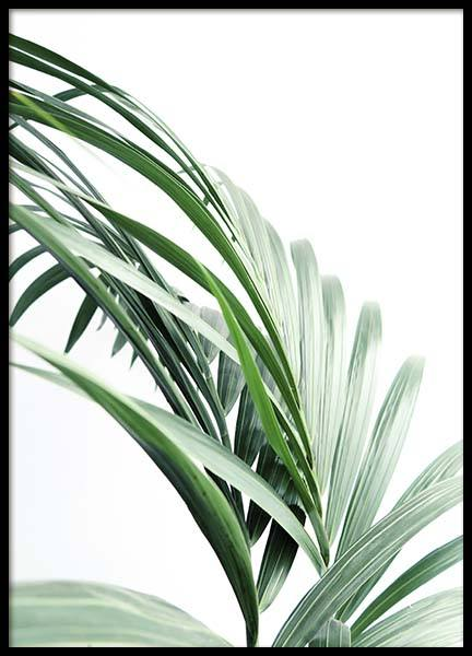 Palm Tree Leaves Close Up Poster in de groep Posters / Fotokunst bij Desenio AB (10244)
