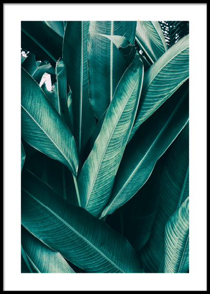 Tropical Leaves No1 Poster in de groep Posters / Fotokunst bij Desenio AB (10439)