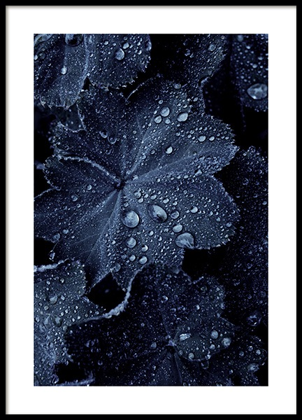 Raindrops on Blue Leaves Poster in de groep Posters / Botanisch bij Desenio AB (11052)