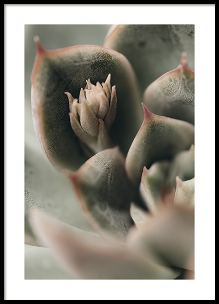 Close up of Succulent Poster in de groep Posters / Botanisch bij Desenio AB (11173)