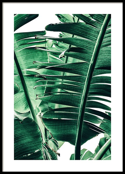 Banana Palm Leaves No1 Poster in de groep Posters / Fotokunst bij Desenio AB (12052)