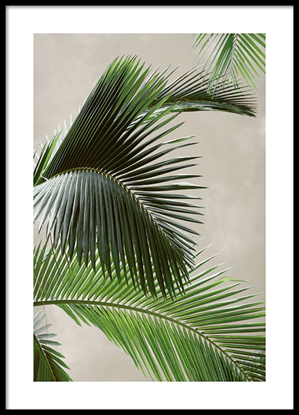 Tropical Palm Poster in de groep Posters / Fotokunst bij Desenio AB (12570)