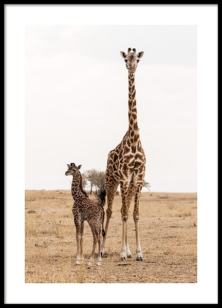 Mother and Baby Giraffe Poster in de groep Posters / Fotokunst bij Desenio AB (12578)