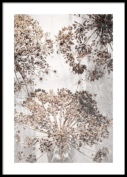 Dried Giant Hogweed No2 Poster in de groep Posters / Fotokunst bij Desenio AB (12664)