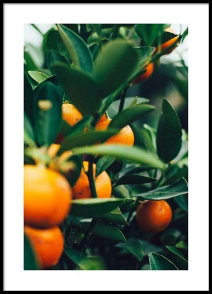 Orange Tree One Poster in de groep Posters / Fotokunst bij Desenio AB (2469)
