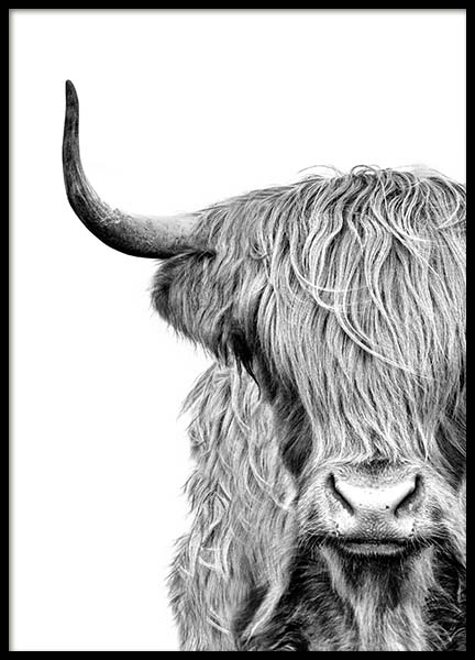 Highland Cow Close Up Poster in de groep Posters / Zwart wit bij Desenio AB (3638)