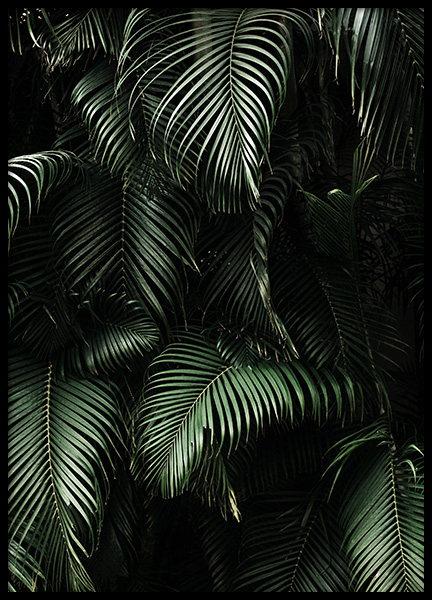 Dark Green Palm Leaves No2 Poster in de groep Posters / Fotokunst bij Desenio AB (3773)