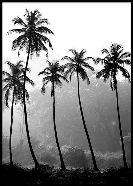 posters   print met foto van palmen in zwart-wit, 50x70cm