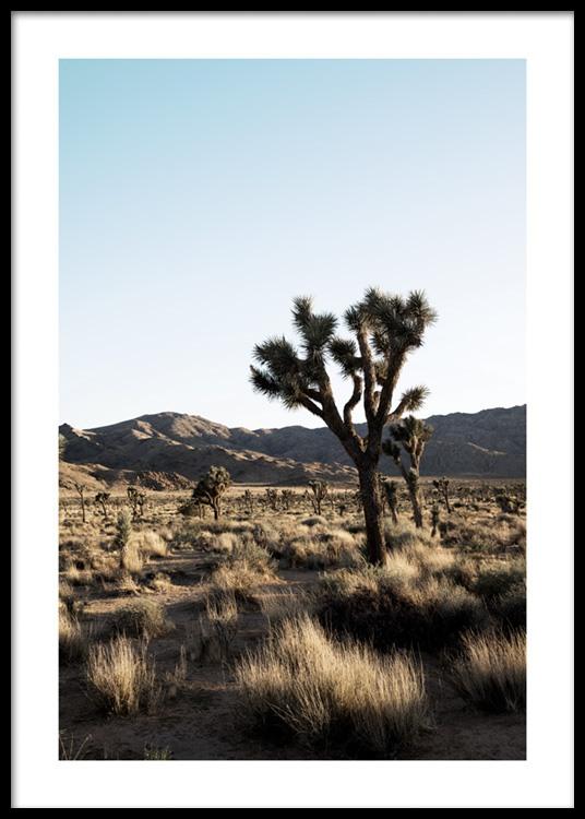 Joshua Tree National Park Poster