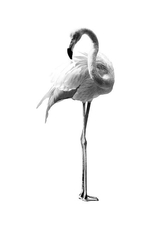 flamingo black and white poster. Black Bedroom Furniture Sets. Home Design Ideas