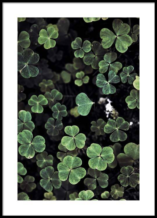Forest Clover Poster