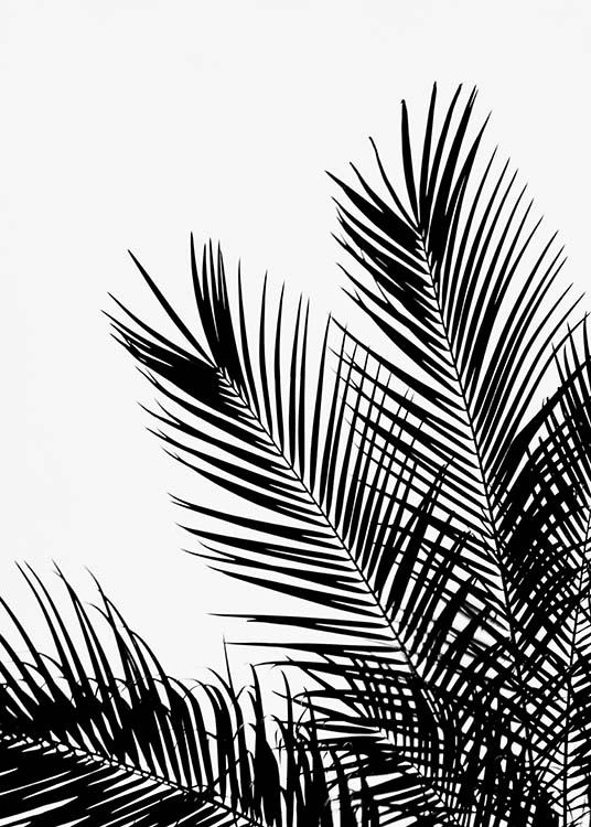 Black Palm Tree One Poster