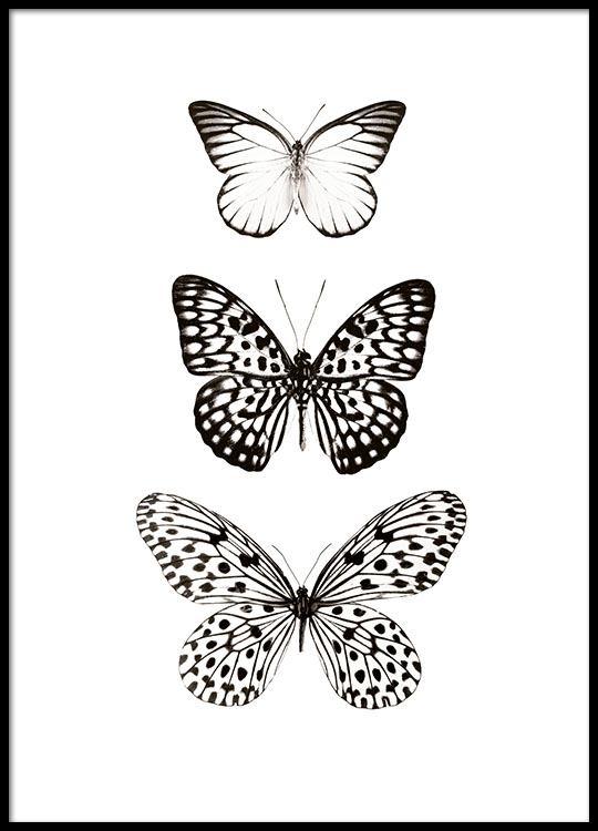 Zwart Wit Poster Met Vlinders Stijlvolle Posters Online
