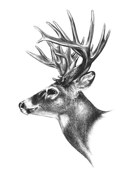 Deer Black And White, Poster / Zwart wit bij Desenio AB (8106)