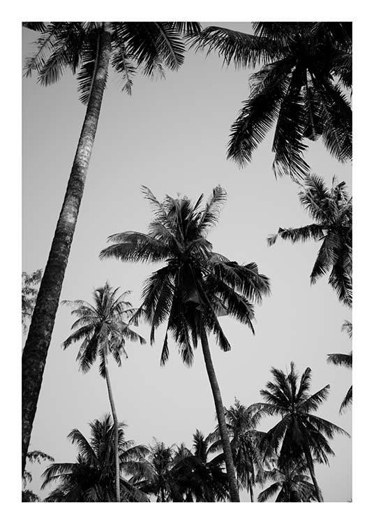 zwart wit poster met palmen fotokunst bij desenio. Black Bedroom Furniture Sets. Home Design Ideas