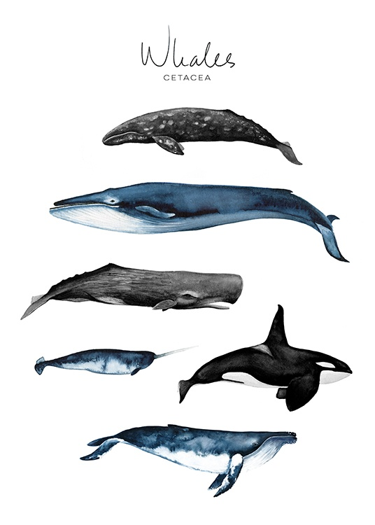 Whales Poster / Kinderposters bij Desenio AB (8989)